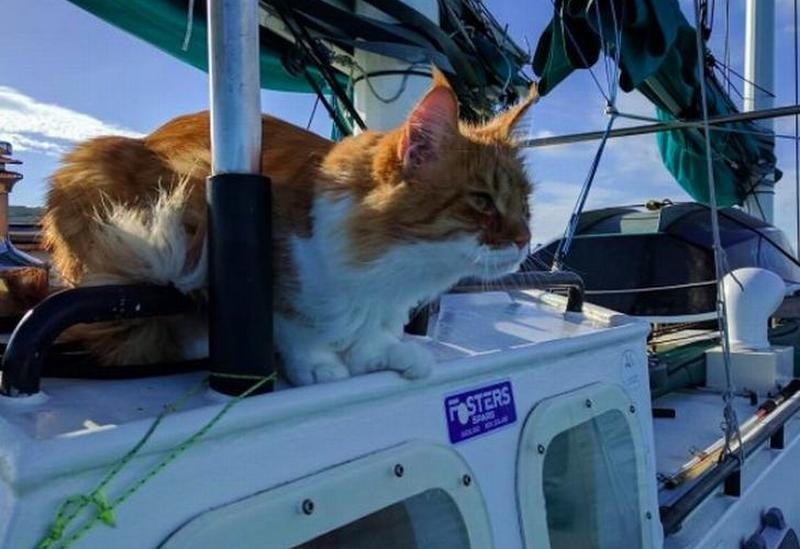 Scatti helps deaf sailor